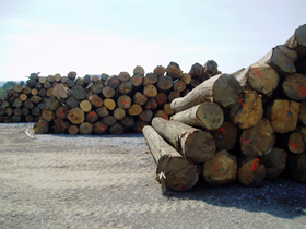 SAW MILL, WOOD PROCESSING AND WOOD CUTTING SERVICE